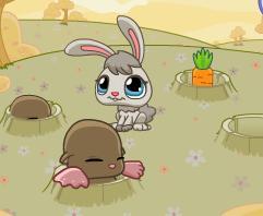 Havunç V e Tavşan