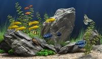 Akvaryumda Büyüyen Balık