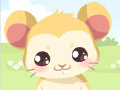 K���k Hamster Bak�m�